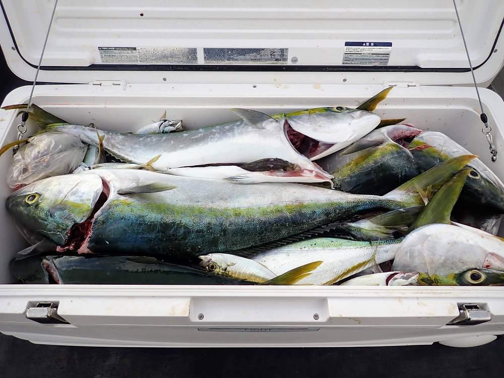 クーラーは釣り仲間とシェア