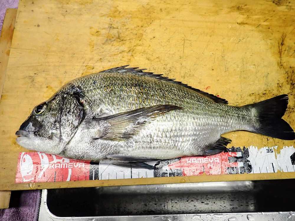 翌日のフカセ釣りの釣果