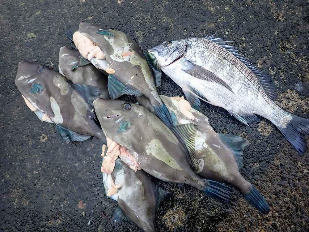 30日大三島フカセ釣り
