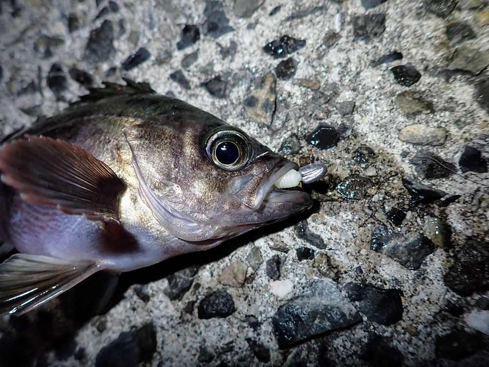 34 Stream head 0.8g&Gulp! SW Baby Sardine 2inch